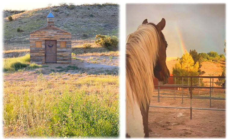 Animal Guardian Network at Healing River Ranch Building a Legacy of Love